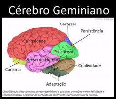 signo_cerebro3
