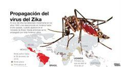 Zika: Organización Mundial de la Salud (OMS) convoca a reunión de emergencia
