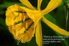 Flor de amancaes, Reserva nacional de Lachay, Perú