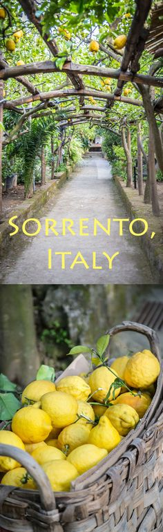 Sweet lemons from Sorrento, Italy are the best for gelato and limoncello. This is why I wander!