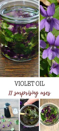 Extracted from leaves and flowers of wild violets this violet oil possesses many benefits for skin however might be able to help with insomnia or rheumatic pain. Natural Essential Oils, Natural Oils, Natural Skin Care, Infused Oils, All You Can, Bathing Beauties, Hair Oil, For Your Health, Natural Living
