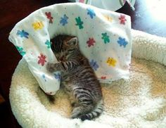 This is exactly what my babies do, they love a blanket in their beds to curl up to :)