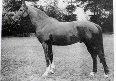 Gosse d'Avril, not an Arabian horse.