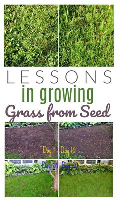 Lessons Learned: Growing Grass from Seed - DIY Passion - Modern Design Grow Grass Fast, Growing Grass From Seed, Planting Grass Seed, Growing Tomatoes From Seed, How To Plant Grass, Fescue Grass Seed, Lawn Care Business, Business Cards, Lawn Care Tips
