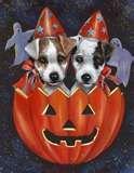 Image detail for -Shug. Sister Wynonna has a Jack Russell terrier named Loretta Lynn ...