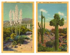 These vintage desert postcards provide a perfect color palette. wall art