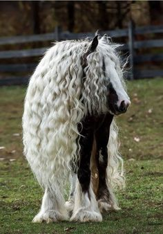 Niemand wird jemals so schöne Haare haben wie mein Pferd.