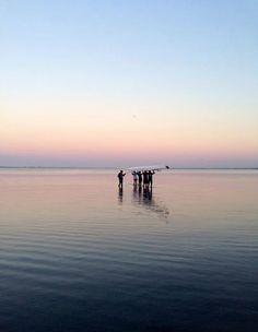 usouthflorida:  (source: The Rowing Club at USF Sarasota-Manatee)