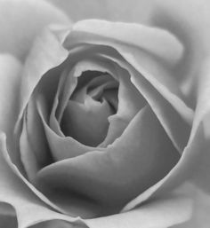 """""""Stop and smell the roses."""" A lovely black and white, you don't need colour for this one.  Website: https://kelzbelzphotography.wordpress.com #roses #photography #wordpress"""