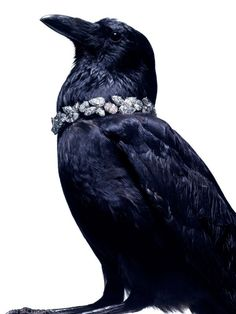 Harry Winston by photographer Laziz Hamani The noble Raven. So different from Crow. Memento Mori, Quoth The Raven, Vikings, Jackdaw, Crows Ravens, Jewelry Editorial, Harry Winston, Jewelry Photography, Fashion Photography