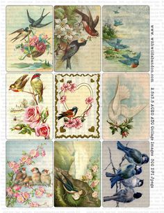 Vintage French Paris Scenery and Antique Bird by withwildabandon, vintage birds, digital collage, ACEO, vintage collage, supplies, handmade, instant download, Gift tags, Scrapbook tags, ephemera, birds