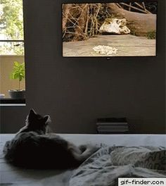 Cat Tries to Jump Into TV to Catch Bird