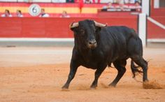 5 Cruel Animal Traditions That Make No Sense Today, RODEOS , hate them and what this story says is right , they tase the animals before they go into the ring so they jump and buck harder