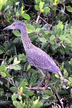 Birds - Puerto Rico
