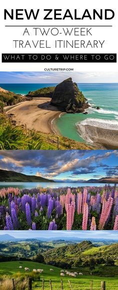 A Two-Week Travel Itinerary to New Zealand|Pinterest: theculturetrip