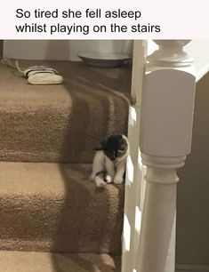 Just Viral Animal Pictures With Captions Of The Day - 22