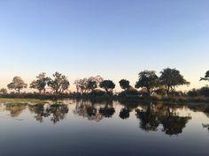 Classic Okavango lagoon scene