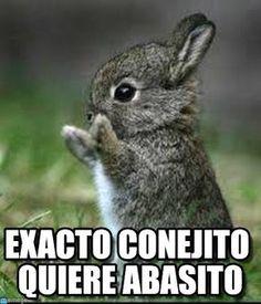 Conejito meme (http://www.memegen.es/meme/6o6n08)