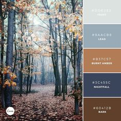 "268 Likes, 6 Comments - Canva (@canva) on Instagram: ""Color Combination: Nordic Woods. Try this chilling palette in your next design. #DDE2E3 #9AACB8…"""