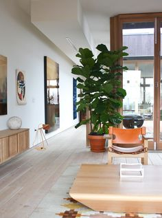How to keep an indoor tree alive