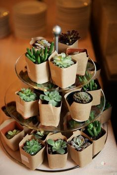 succulent wedding favors with a simple kraft paper wrap on a tiered tray display