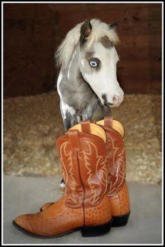 An adorable miniature horse from Therapy Horses of Gentle Carousel