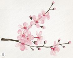 Resultado de imagen para chico y flores de sakura