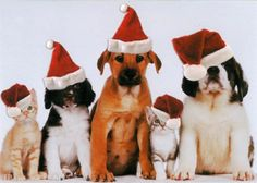 http://4.bp.blogspot.com/_n52xbyFRPUo/TP_QvPM1l9I/AAAAAAAAA2k/15ZPbuyHI64/s320/christmas cats and dogs.jpg