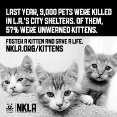 Kitten euthanasia