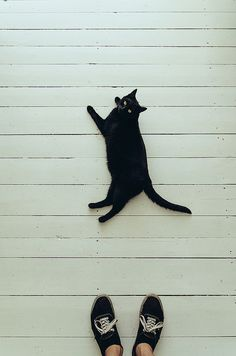 Black Cat on a White Pier Crazy Cat Lady, Crazy Cats, I Love Cats, Cool Cats, Gatos Cats, Cat Boarding, Cute Creatures, Oeuvre D'art, Cat Art