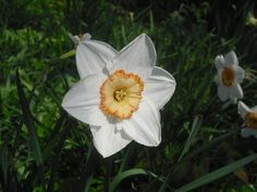 Das schöne am Frühling ist, dass er immer gerade dann kommt, wenn man ihn braucht. (Jean Paul)