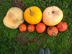 Aká je vaša najobľúbenejšia jesenná zelenina?  What is your favorite autumn vegetable?  #zelenina #tekvice #nitra #slovensko #slovakia #zdravastrava #zdravarestauracia #restauracia #jesen #zdravejedlo #sezonnepotraviny #pumpkins #veggies #autumn