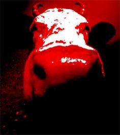 Stierkampf: Eine teuer subventionierte Tierquälerei | WUNDERBLOG
