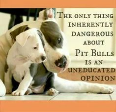 Uplifting So You Want A American Pit Bull Terrier Ideas. Fabulous So You Want A American Pit Bull Terrier Ideas. Pitbull Terrier, Amstaff Terrier, Bull Terriers, Terrier Dogs, American Pit Bull Terrier, Pitt Bulls, Dog Shaming, Pit Bull Love, Mundo Animal