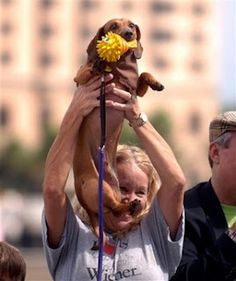 #Savannah Wiener Dog Races coming up on October 6th on River Street!