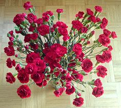 Rote Nelken / Carnations