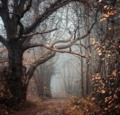 Can't wait til forests look like this again! But I will probably be too scared to enter it though haha