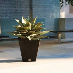 Clean and simple, the NOBLETON design is the perfect piece to refresh an empty corner or anchor small or large plants alike. Featuring a subtle slate finish and a sleek, contemporary square tapered design, the Nobleton planter is ideal as a poolside a Wood Barrel Planters, Front Door Planters, Resin Planters, Indoor Planters, Plastic Planter Boxes, Plastic Pots, Small Shrubs, Large Plants, Flower Shop Decor