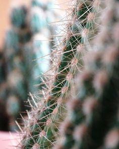 Cactus. Close. Plant. Nature. Photograph | Instagram: cbriannem