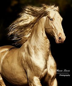 What a beautiful horse, I think it is a Cremello