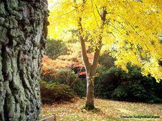Exbury Gardens, Hampshire UK