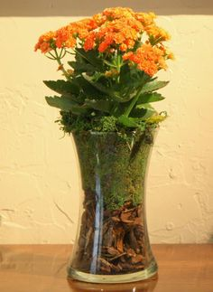 Use the large glass hurricanes with just moss in the bottom and the flowers. Bark & moss in a clear vase {The Creativity Exchange}