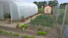 Serre tunnel largeur 3 m Saumuroise Serre Tunnel, Plants, Small Gardens, Green Houses, Vegetable Gardening, Flora, Plant, Planting