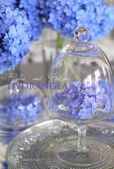 Hydrangea under glass . Periwinkle Wedding, Periwinkle Color, Periwinkle Flowers, Purple, Hortensia Hydrangea, Hydrangea Flower, Hydrangeas, Light Spring, Warm Spring