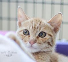 Trey was adopted on 9/14/14!