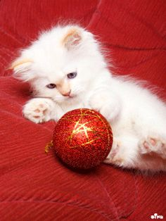 All things merry and bright For more Christmas cats, visit https://www.facebook.com/funholidaycats
