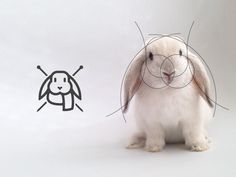 The living grid by Gustavo Zambelli