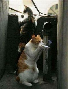 Bad cats!