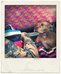 Pitbull in Love! Pitbulls, Polaroids, Film, Dogs, Animals, Movie, Animales, Film Stock, Animaux