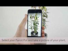 Parrot POT - App setup tutorial